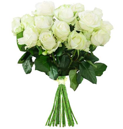 """10 weiße Rosen """"White Avalanche"""""""