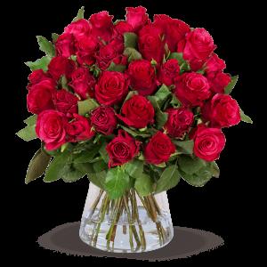 20 - 50 rote Rosen