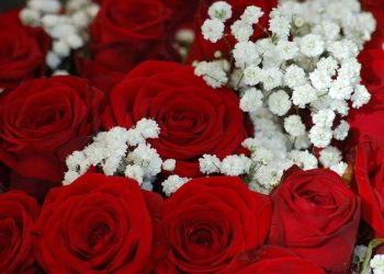 red-roses-4095761_640